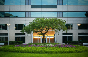 commercial landscaping Dallas TX